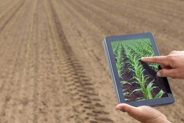 Agrocomputação- em uma área rural sem plantio aparece mãos segurando um tablet com a imagem da projeção da área após plantação