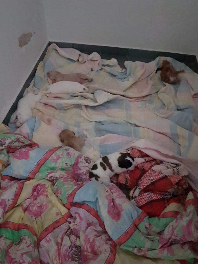 Beco já tirou mais de 150 animais das ruas de Prudente