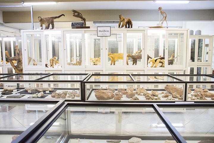 Ser professor: Vários animais taxidermizados pertencem ao Aecin