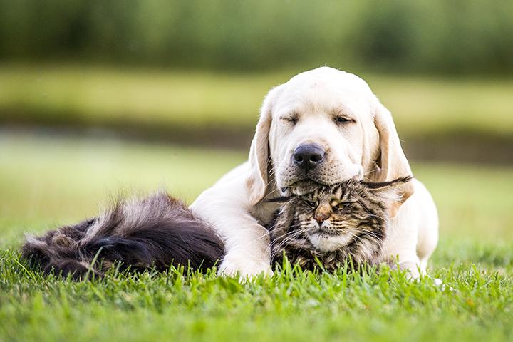 Castração em animais: cachorro branco e gato rajado abraçados