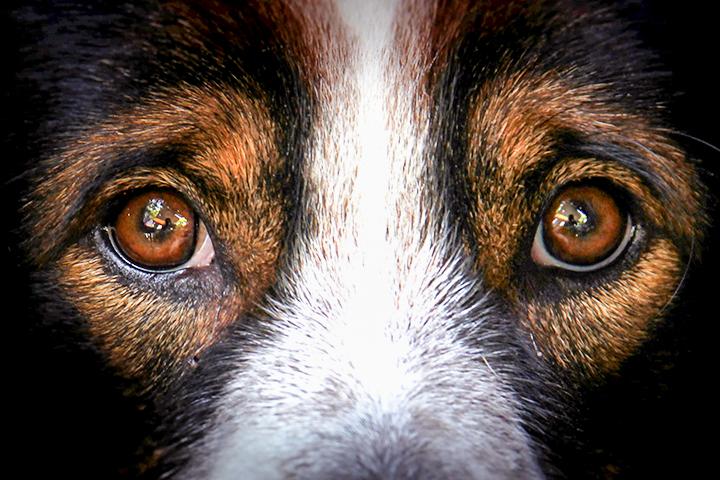Maus-tratos de animais é crime: cachorro olhando para a tela